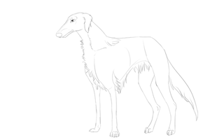 Free to use Borzoi line art by Whitelupine