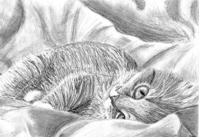 Kit in a Blanket by Meorow