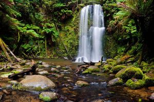 Beauchamp Falls - The Otways by fusionx