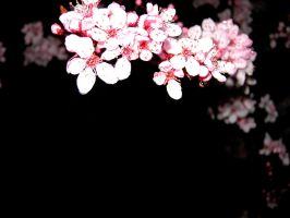 Blossom Background by Kira-Aso