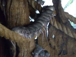 Colchester Zoo photos 7 by pan77155