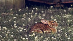 Bunny Watcher. by Gabrielle-amor