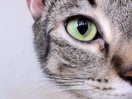 i see you by meli31295