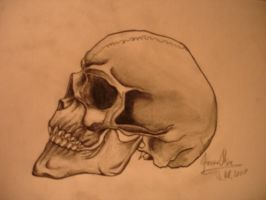 skull by pencil by JOVictory