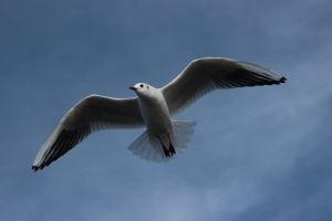 Gull 1 by wuestenbrand