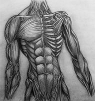 anatomy: torso by Kuroi-Sama