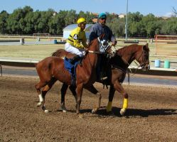 Racehorse Stock 36 by Rejects-Stock