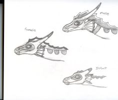 Old draconic prey concept 2 by Dinoboy134