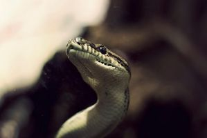 Sssssnake by kailay
