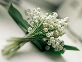 lily of the valley by Erofeecheva