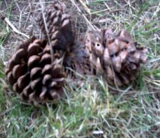 pine cones by hope-for-the-broken