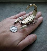 Mechanical Scorpion No 7 (III) hand for scale by AMechanicalMind