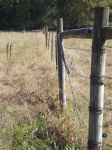 Barbed Wire Fence - Stock by KaiyaStock