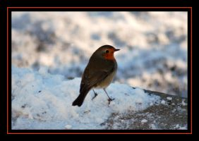 Red Breast in the Snow 2 by Taitai03