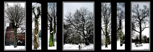 Snow Tree Collage by Hluthvik