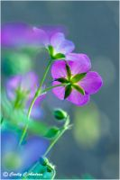 Wild Geranium II by CecilyAndreuArtwork