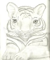 Baby tiger sketch by Belinda32