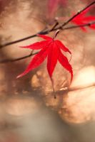Autumn leaves 17 by TheEtherealSoul