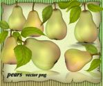Pears Vector by roula33