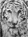 Tiger by daevilmagiciano