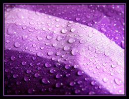 Purple Droplets.... by Pjharps