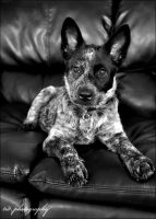 Molly is Black and White by BlueSuit