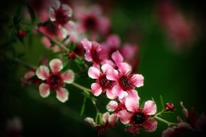 Blossoms 3 by Vividlight