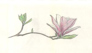 Magnolia blossom_large-lily by Solitae