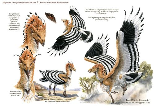 Custom Aequis: Hoopoe by pallanoph