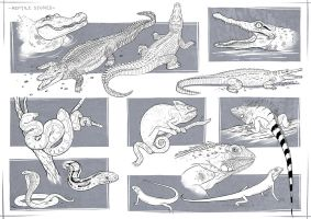 Reptile  Studies by sjea