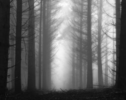 Fade to grey by erynlasgalenphotoart