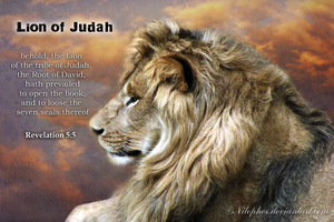 Lion of Judah by Nilopher