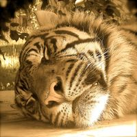 sleeping tiger by Gib-Art-and-Pinups