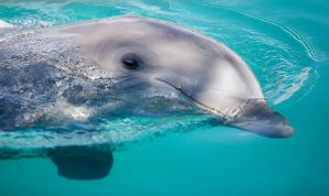 Dolphin by secondclaw