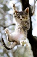 Hang in there kitty! by Meddling-With-Nature