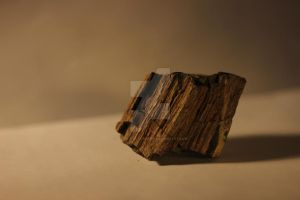 Petrified Wood by Defiant-Retribution