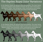 The Hayden Royal Color Variation by Sommer-Studios