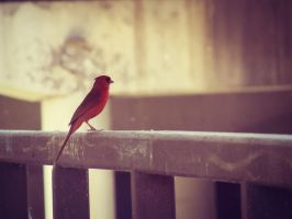 Little Red Bird by Skysofdreams