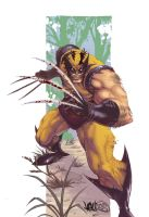 Wolverine by MBirkhofer