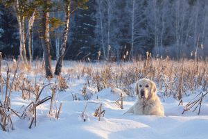 Winter holidays by DeingeL-Dog-Stock