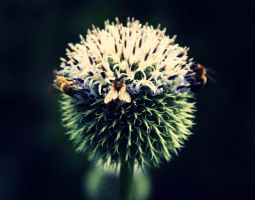 thistle on saturday no.1 by papercerise