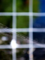 Spider Web 9 by MegBethany