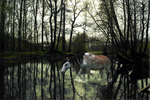 River Horse by Hayleys-graphics