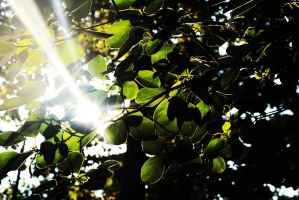 Light Through Leaves. by ayanefujimoto