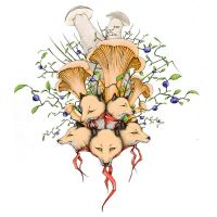 Chanterelles by Gogolle