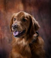 Remington Portrait by DoggyFanatic