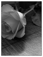 silk to the touch by vickibruce