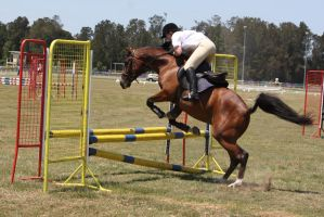 STOCK Showjumping 437 by aussiegal7