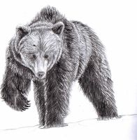 American Black Bear by gollz365