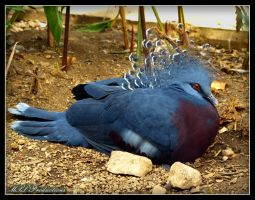Victoria Crowned Pigeon by Dracoart
